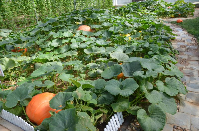 昌平草莓馆里的农家院